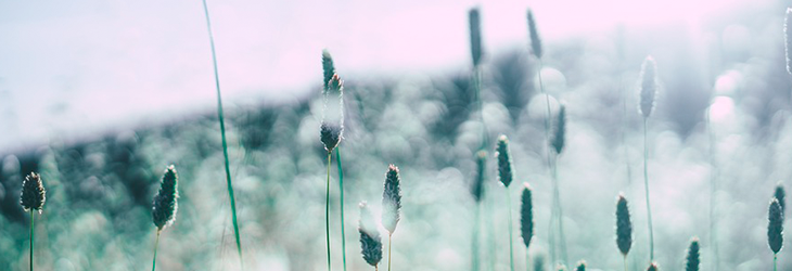 huskurer mot pollenallergi
